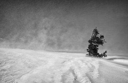 Winter_Desolate