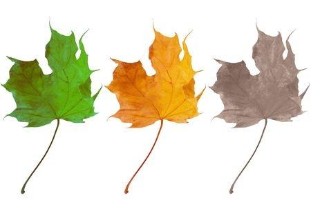 Leaves Aging