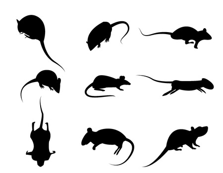 43555948 - set of black silhouette rat icon, isolated vector on white background